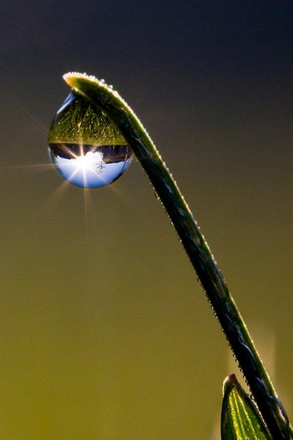 droop of dew 05 Amazing Photos of Dew Drop