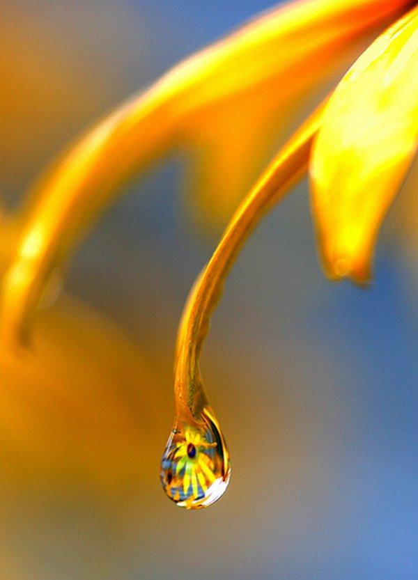 droop of dew 06 Amazing Photos of Dew Drop