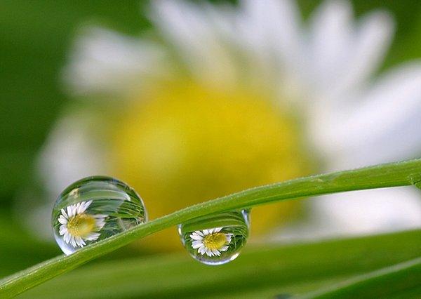 droop of dew 08 Amazing Photos of Dew Drop