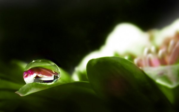 droop of dew 10 Amazing Photos of Dew Drop