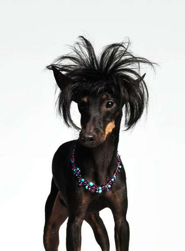 coifs dogs 03 Crazy Dog Hairstyles