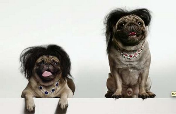coifs dogs 05 Crazy Dog Hairstyles