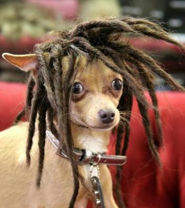coifs dogs 10 Crazy Dog Hairstyles