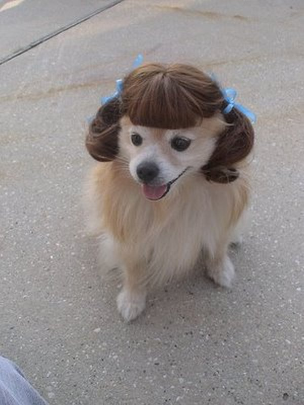 coifs dogs 11 Crazy Dog Hairstyles