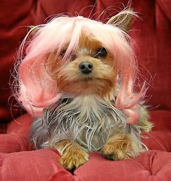 coifs dogs 12 Crazy Dog Hairstyles