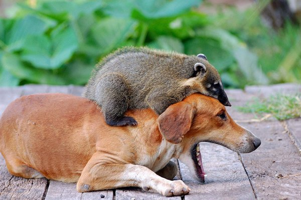 funny animals 10 Funny Animals That Will Make You Laugh
