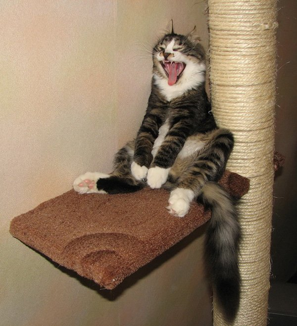 funny animals 22 Funny Animals That Will Make You Laugh