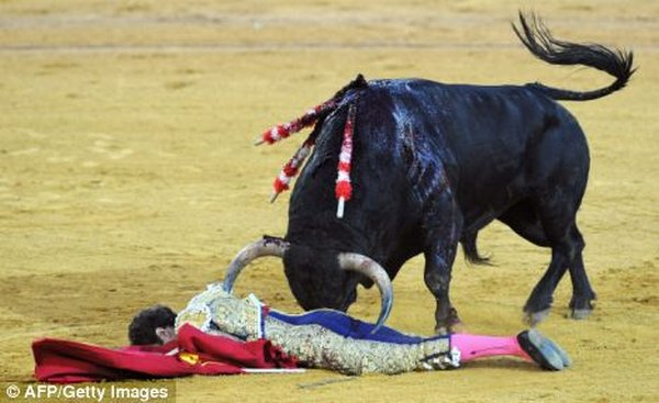 matador spain 11 Dramatic Moments When Matadors Get Gored by a Bull