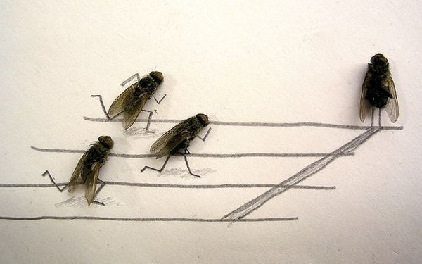 flies 10 What To Do If it Gets Boring During Work