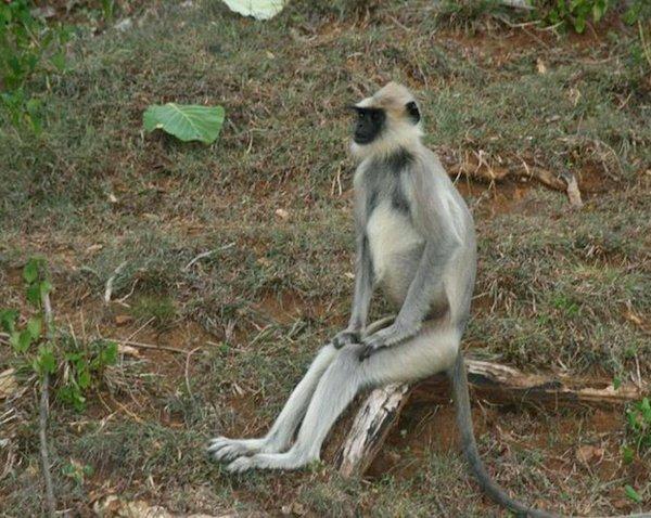 animal sitting like humans 09 20 Photos of Animals Sitting Like Humans