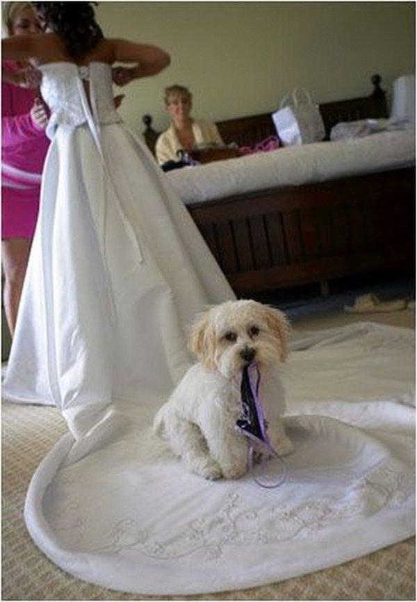 Ах эта свадьба 22 фото юмор анекдоты
