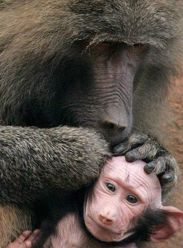funny animals 10 That Crazy Crazy Animal World