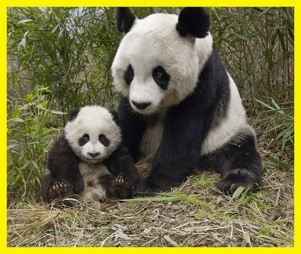love of mother and baby 01 Sweet & Funny Love Of Mother And Baby Animals