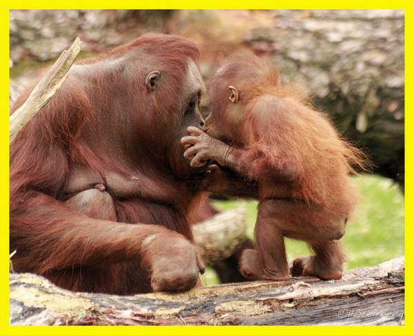 love of mother and baby 02 Sweet & Funny Love Of Mother And Baby Animals