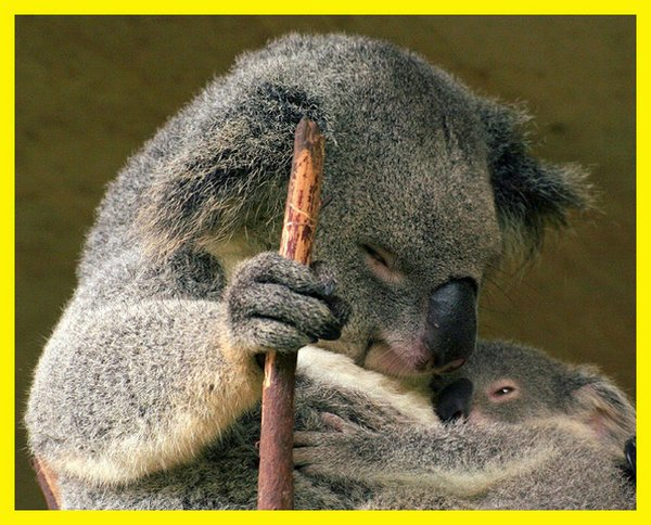 love of mother and baby 04 Sweet & Funny Love Of Mother And Baby Animals