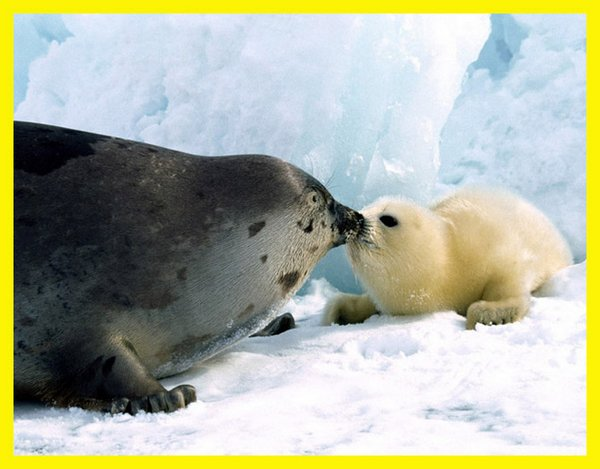 love of mother and baby 08 Sweet & Funny Love Of Mother And Baby Animals
