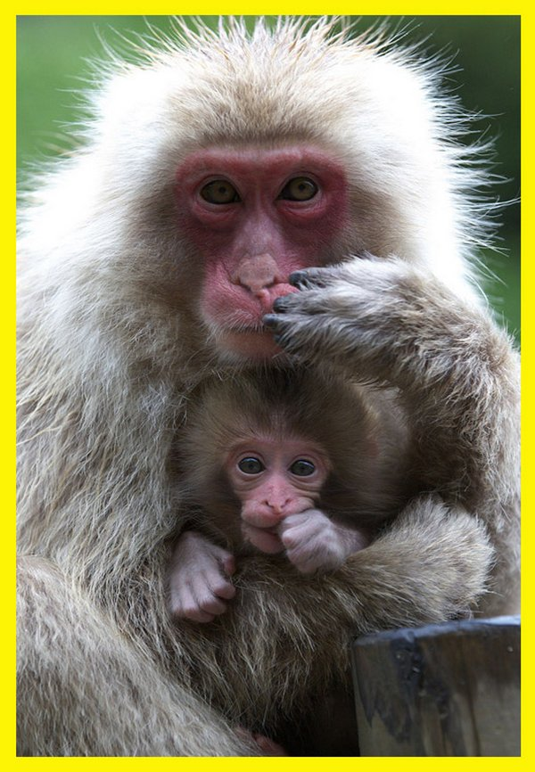 love of mother and baby 12 Sweet & Funny Love Of Mother And Baby Animals