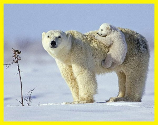 love of mother and baby 15 Sweet & Funny Love Of Mother And Baby Animals