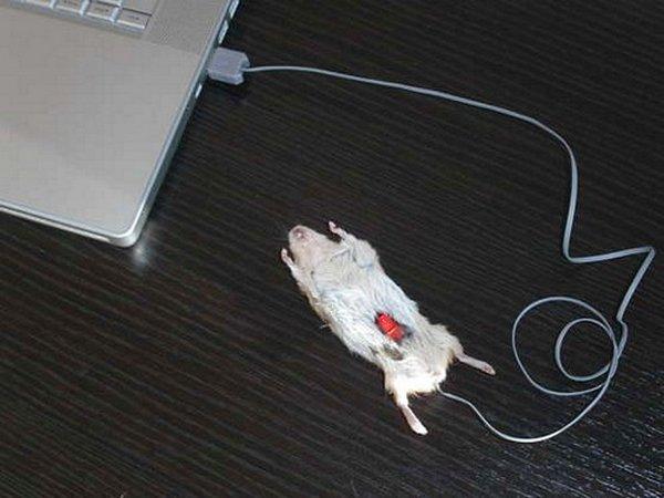 most creative computer mice 09 15 Most Creative Computer Mice