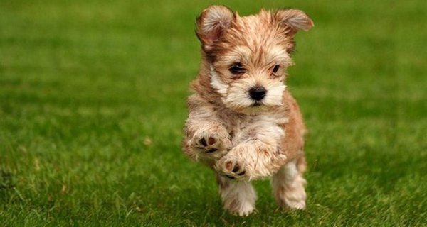 cutie baby animals 14 35 Cutie Baby Animals Bring You A Good Mood