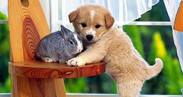 cutie baby animals 20 35 Cutie Baby Animals Bring You A Good Mood