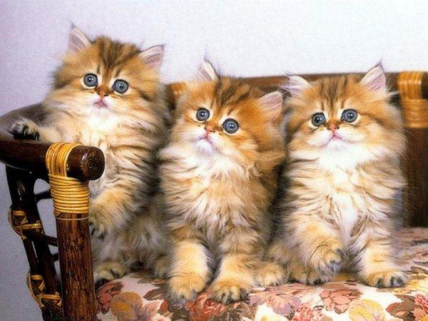 cutie baby animals 32 35 Cutie Baby Animals Bring You A Good Mood