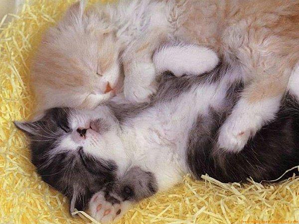 cutie baby animals 33 35 Cutie Baby Animals Bring You A Good Mood