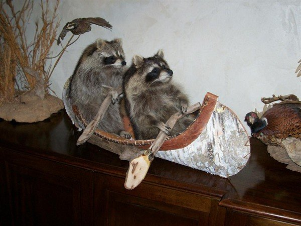 taxidermy 02 The Most WTF Taxidermy Ever