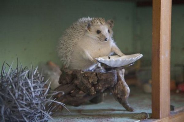 taxidermy 13 The Most WTF Taxidermy Ever