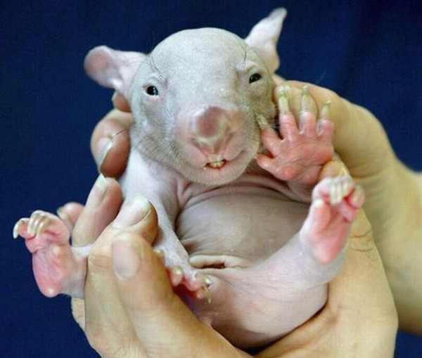 cutest baby animals 07 Top 40 Cutest Baby Animal Photos On The Internet