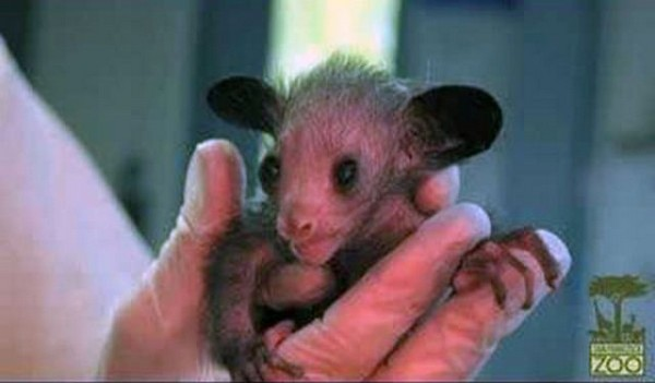 cutest baby animals 10 Top 40 Cutest Baby Animal Photos On The Internet