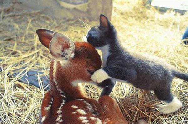 ten animals dynamic duos 07 Top 10 Cutest Animal BFFs