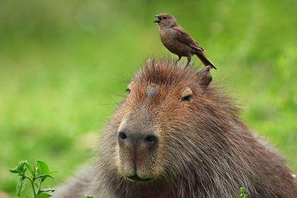 ten animals dynamic duos 09 Top 10 Cutest Animal BFFs