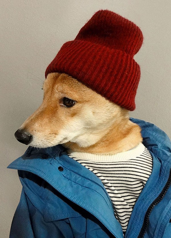 menswear dog wearing designer gear 01 Menswear Dog Wearing Designer Gear