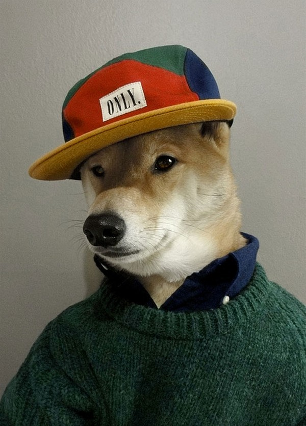 menswear dog wearing designer gear 02 Menswear Dog Wearing Designer Gear