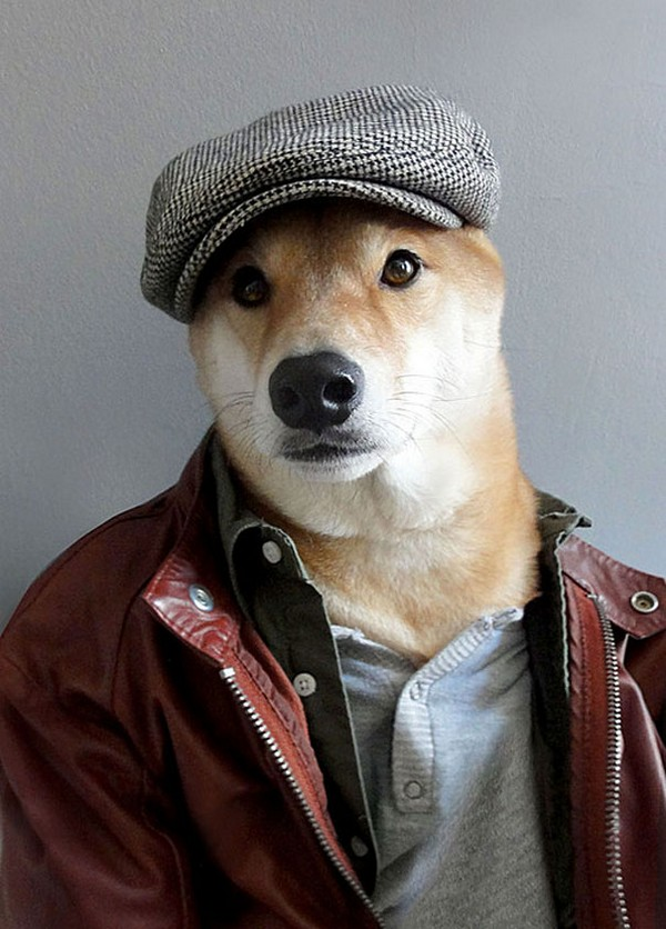 menswear dog wearing designer gear 03 Menswear Dog Wearing Designer Gear