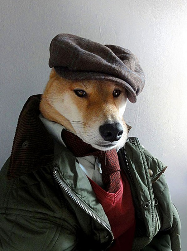 menswear dog wearing designer gear 05 Menswear Dog Wearing Designer Gear