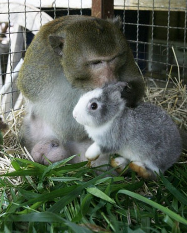 pictures of unlikely animal friendships 03 Pictures of Unlikely Animal Friendships