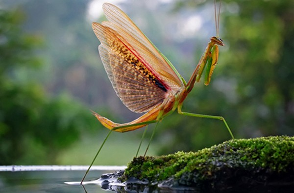 beautiful examples of animal photography 03 Top 10 Most Beautiful Examples of Animal Macro Photography