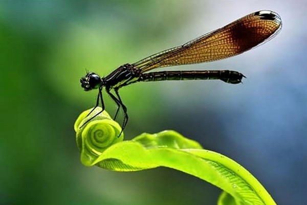 beautiful examples of animal photography 42 Top 10 Most Beautiful Examples of Animal Macro Photography