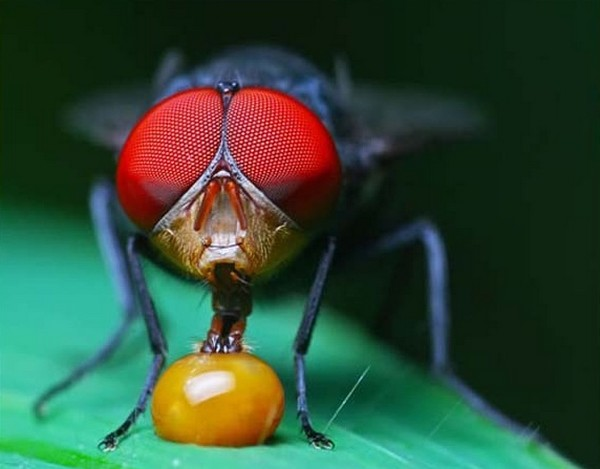 beautiful examples of animal photography 48 Top 10 Most Beautiful Examples of Animal Macro Photography