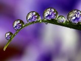 Amazing Photos of Dew-Drop
