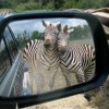 Funny Animals That Will Make You Laugh