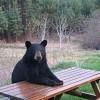 20 Photos of Animals Sitting Like Humans
