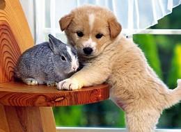 35 Cutie Baby Animals Bring You A Good Mood