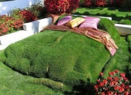 Amazing Creative Nature