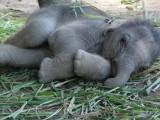 Top 40 Cutest Baby Animal Photos On The Internet