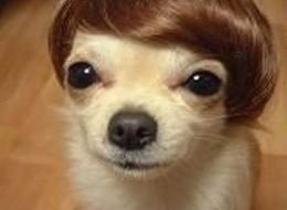 20 Oddest Fashion Dogs