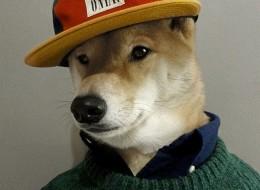 Menswear Dog Wearing Designer Gear