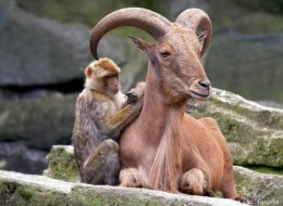 Pictures of Unlikely Animal Friendships